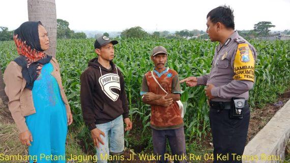 Sambang Petani Jagung Manis Bhabinkamtibmas Kelurahan Temas Polsek Batu Kota Polres Batu Jaga Sinergitas