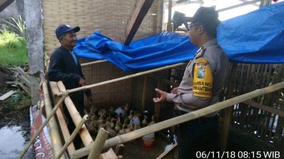 Kegiatan Silaturahmi dan DDS, Sambang Desa Kunjungan Potensi Ternak Itik Bhabinkamtibmas Kelurahan Songgokerto Polsek Batu Kota Polres Batu