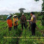 Bhabin Polsek Batu Kota Polres Batu Sambang Petani Seledri