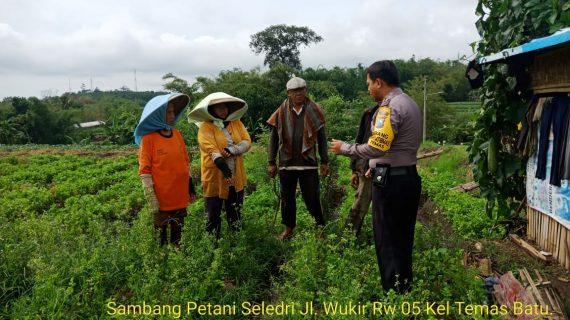 Sambang Petani Seledri Bhabinkamtibmas Kelurahan Temas Polsek Batu Kota Polres Batu