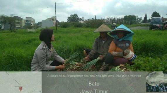 Anggota Bhabinkamtibmas Desa Pesanggrahan Polsek Batu Kota Polres Batu Sinergi Masyarakat Tani