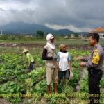 Anggota Bhabinkamtibmas Silaturahmi dan Sambang Warga, Sambang Petani Sawi Ret Bhabinkamtibmas Kelurahan Temas Polsek Batu Kota
