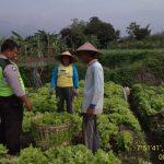 Ps kanit bimas polsek Batu Kota melaksanakan sambang dan biluh kepada petani sayur