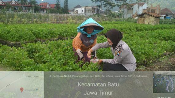 Bhabinkamtibmas Desa Pesanggrahan Polsek Batu Kota Polres Batu Sambang petani sayur